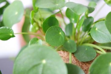 5 Produits ménagers naturels et faits maison [DIY] Pilea